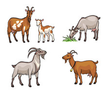 Set Of Different Goats  - Vector Illustration
