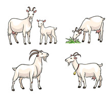 Set Of White Goats - Vector Il...