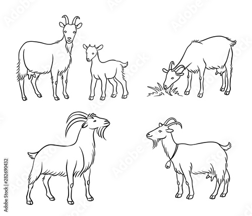 Foto Set of different goats in contours - vector illustration