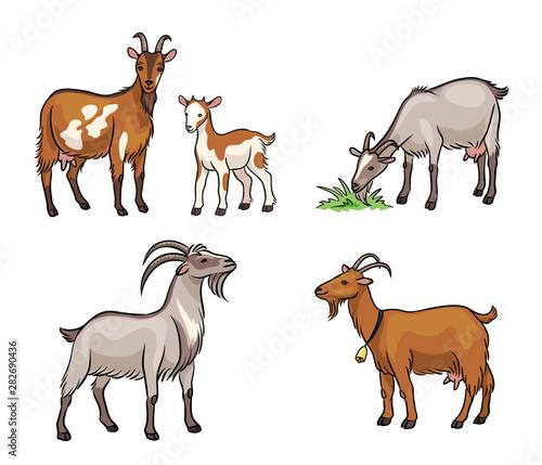 Fotografia Set of different goats  - vector illustration