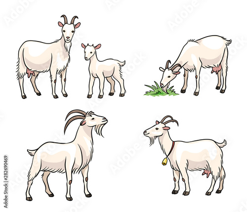 Fényképezés Set of white goats - vector illustration