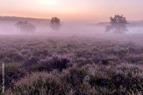 Nature Sunrise on the Heide - De Teut in Limburg, Belgium