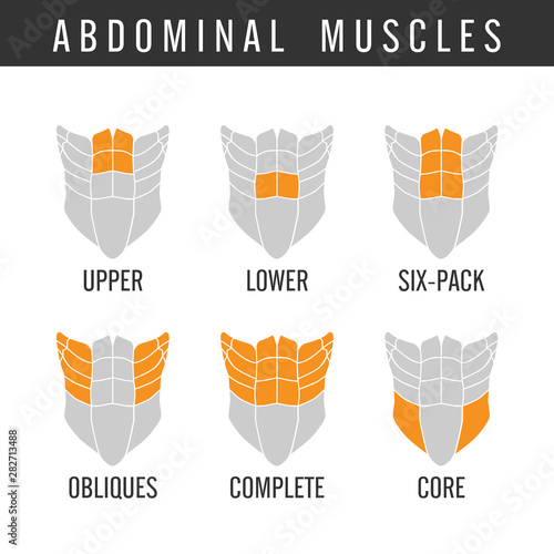 Fotografia Human Abdominal muscles overall in icon style