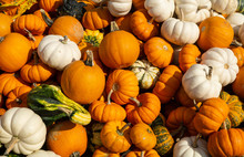 Pumpkins And Gourds At Farmers...