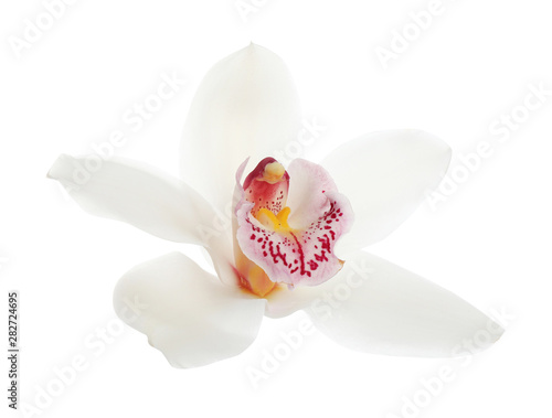 Foto auf Leinwand Orchideen Beautiful tropical orchid flower on white background