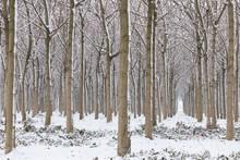 Woods Arcade In Winter