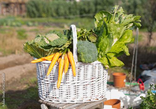 Foto auf AluDibond London Basket of freshly picked vegetables