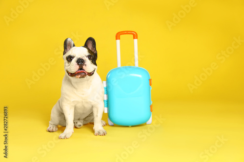 French bulldog with little suitcase on yellow background Fototapete