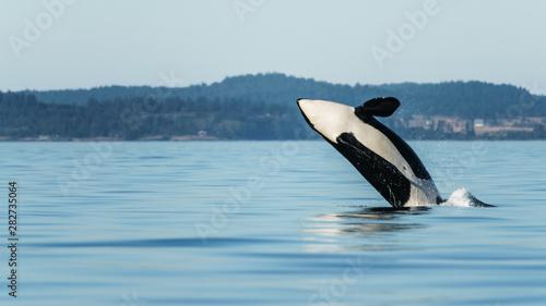 Photo Orca Breach