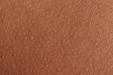 Dark Brown Human Skin Texture Background
