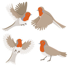 Robin Bird Set Isolated On White Background. Vector Graphics.