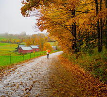 A Person Walks Down The Road With An Umbrella For The Mild Rain Under Autumn Colors In Vermont