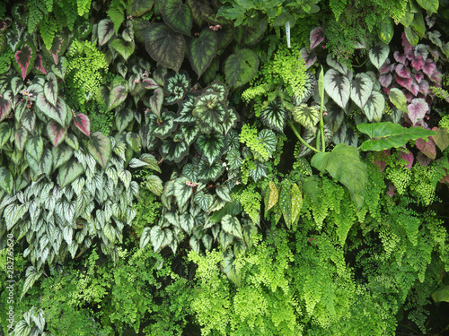 Vertical garden Green living wall lush vegetation with different plants - fototapety na wymiar