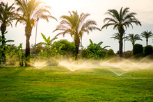Lawn Sprinkler Spraying Water Over Green Grass On A Summer Evening. Palm Trees Background
