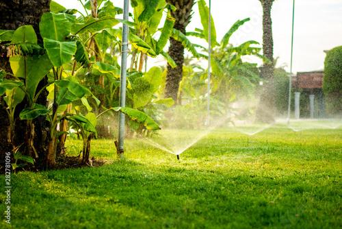 Vászonkép Modern automatic sprinkler working on grass irrigation