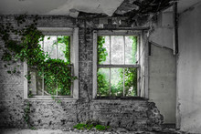 Ivy Growing Into Abandoned House Black And White