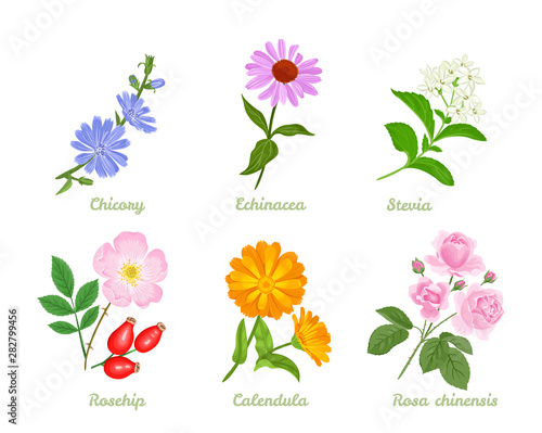 Set of medicinal plants, herbs and flowers isolated on white background Canvas Print
