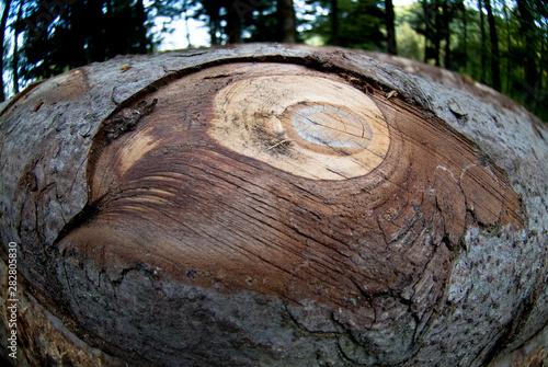 Wall Murals Firewood texture Noeud sur un tronc d'arbre découpé en forêt