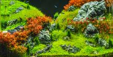 Planted Aquarium With Tropical...