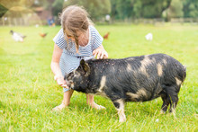 Pretty Little Girl Taking Care Of A Dwarf Pig