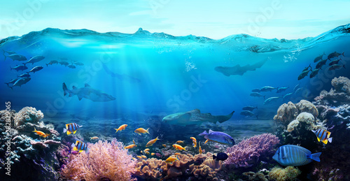 Tuinposter Koraalriffen Tropical coastal waters. Underwater view of the coral reef. Life in the ocean.