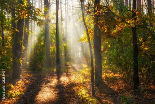 Fototapeten Wald Walk in the woods. Pleasant autumn weather. Sun rays play in the branches of trees.