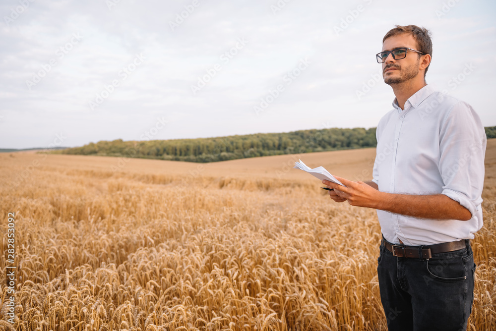 Fototapety, obrazy: Agriculture, farmer or agronomist inspect quality of wheat in field ready to harvest