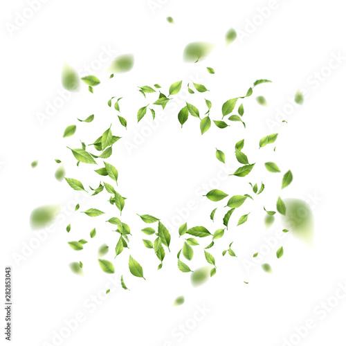 Fototapeta Green Flying Leaves obraz
