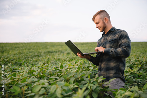 Fototapeta Young agronomist holds tablet touch pad computer in the soy field and examining crops before harvesting. Agribusiness concept. agricultural engineer standing in a soy field with a tablet in summer obraz
