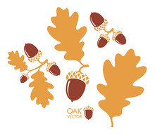 Oak Tree. Branch. Isolated Acorns And Leaves On White Background