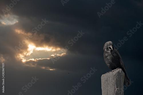 Mysterious crow before night Fototapeta