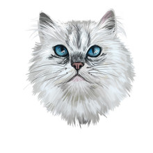 British Longhair Cat Isolated On White Background. Digital Art Illustration Of Hand Drawn Kitty For Web. Long Haired Elegance Kitten With Dense And Fluffy Ashy White Shade Of Coat, Deep Blue Eyes