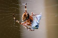 Spider Catching Dinner