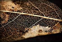 Leaf Decay