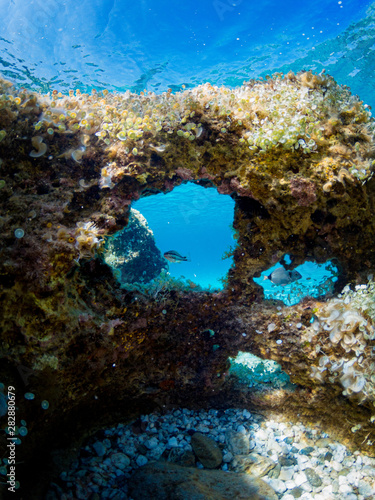 Rocks with holes at the bottom of the Mediterranean sea with fish and aquatic plants Canvas Print