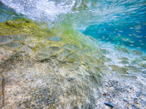 Mediterranean sea floor with sand, rocks and a lot fish in background Canvas Print
