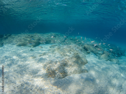 Photo  Mediterranean sea floor with sand, rocks and a lot fish in background