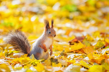 Portrait Of Cute Squirrel Sitt...