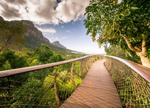 Canopy Walkway, Kirstenbosch National Botanical Garden