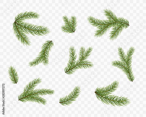 Valokuvatapetti Fir branches isolated on transparent background
