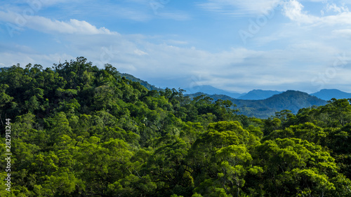 Obraz Beautiful mountain forest scenery in Taiwan. Elevated view of nature landscape. - fototapety do salonu