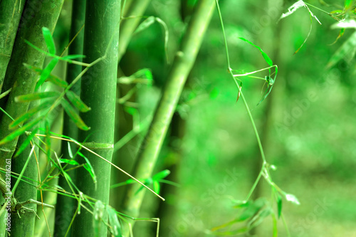 fototapeta na lodówkę Bamboo green forest background