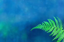 Bright Green Macro Fern Leaf On A Beautiful Blue Natural Background. Blurred Gentle Soft Background With Free Space For Text