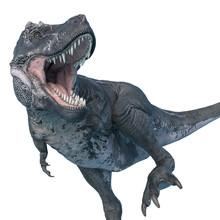 Tyrannosaurus Rex Angry Walk