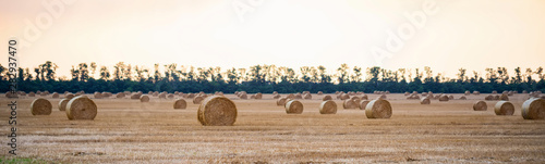 Fotografia, Obraz  Panoramic view of big round haystacks on field in countryside