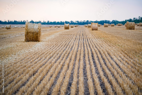Big round haystacks on field in countryside Canvas-taulu