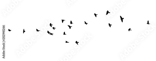Fényképezés  A flock of flying birds. Vector illustration