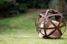 Side View Of A Cream Tabby White Ginger Maine Coon Cat Resting In A Rusty Metal Garden Sphere Sculpture Observing The Back Yard Outdoors
