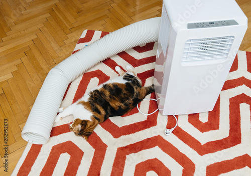 Obraz Cat inspecting unboxed new portable air conditioner unit AC during hot summer in living room - fototapety do salonu