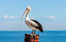 A Pelican On A Pole In The Water